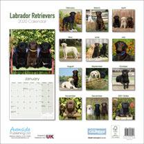 Dog Breed Calendar - Labrador Retrievers
