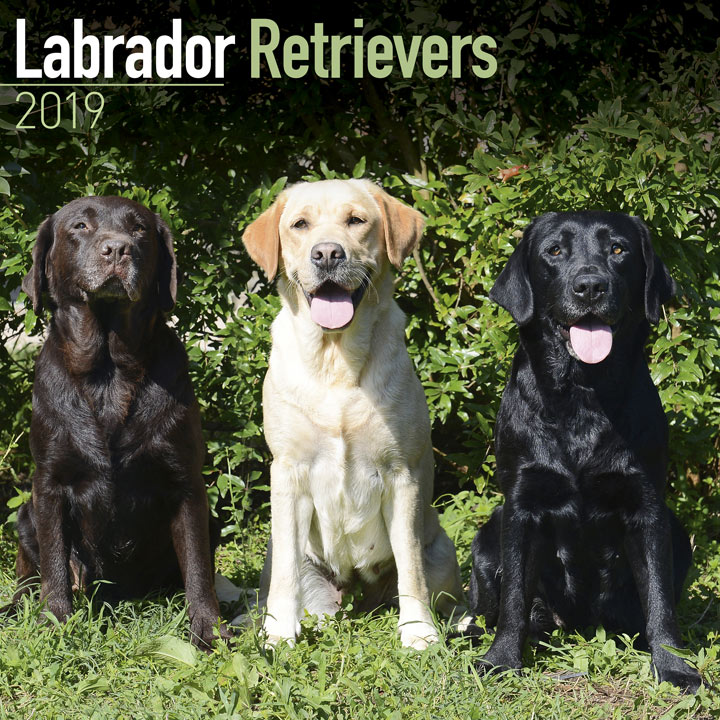 Dog Breed 2019 Calendar - Labrador Retrievers