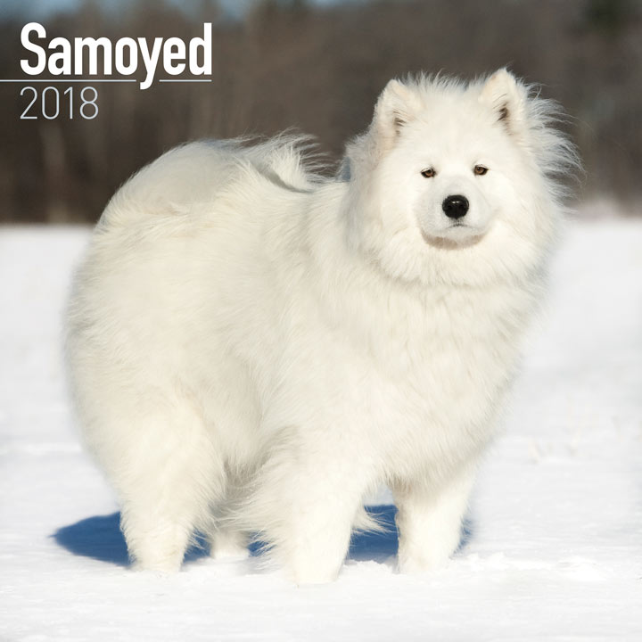 Dog Breed 2018 Calendar - Samoyed
