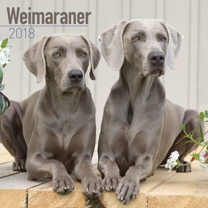 Dog Breed 2018 Calendar - Weimaraner