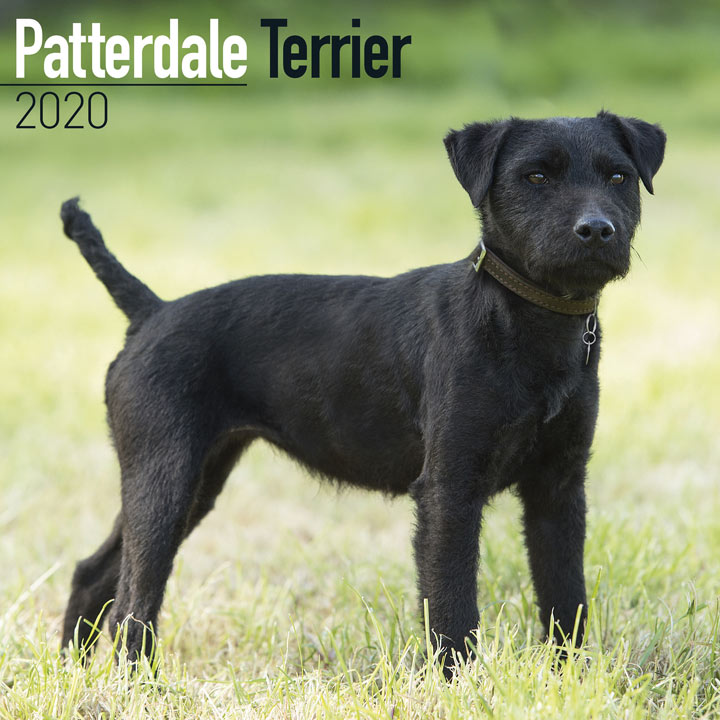Dog Breed Calendar - Patterdale Terrier