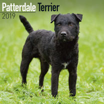 Dog Breed 2019 Calendar - Patterdale Terrier