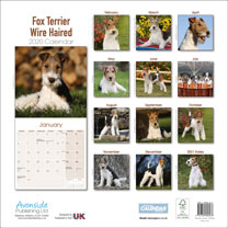 Dog Breed Calendar - Wire Haired Fox Terrier