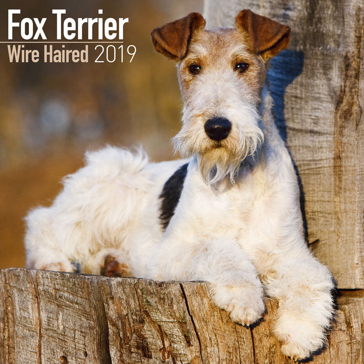Dog Breed 2019 Calendar - Wire Haired Fox Terrier