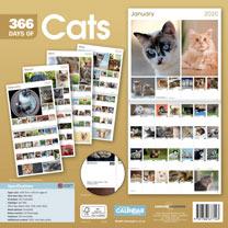 Wall Calendar - 365 Days of Cats