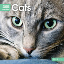 Wall Calendar - Days of Cats