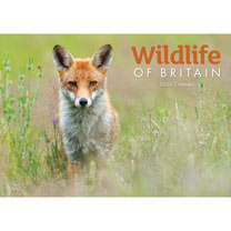 A4 Calendar - Wildlife of Britain