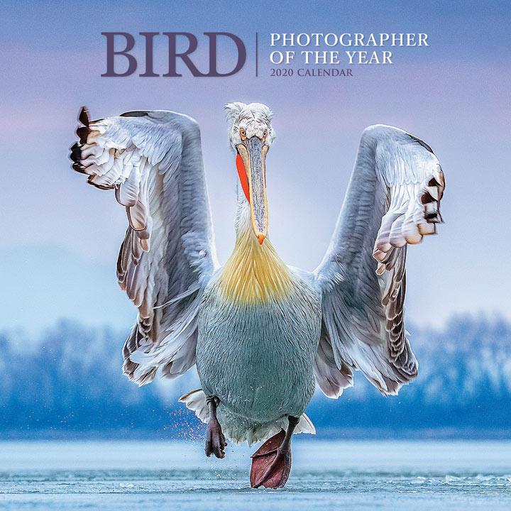 Wall Calendar - Bird Photographer