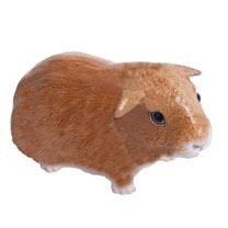 RSPCA Adorables - Guinea Pig