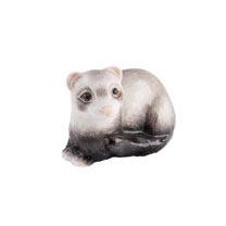 RSPCA Adorables - Ferret