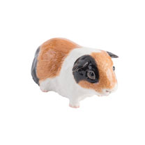 RSPCA Adorables - Tri-colour Guinea Pig