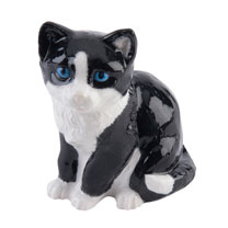 RSPCA Black & White Kitten