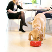 Dog Bowl - Red