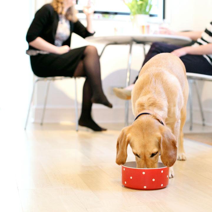 Dog Bowl - Red