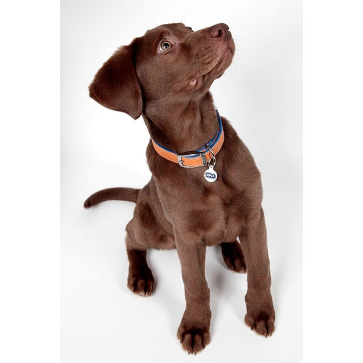 RSPCA Leather Collar with ID Tag