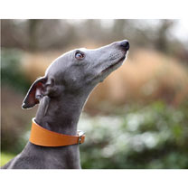 RSPCA Tan Leather Collar with Tag
