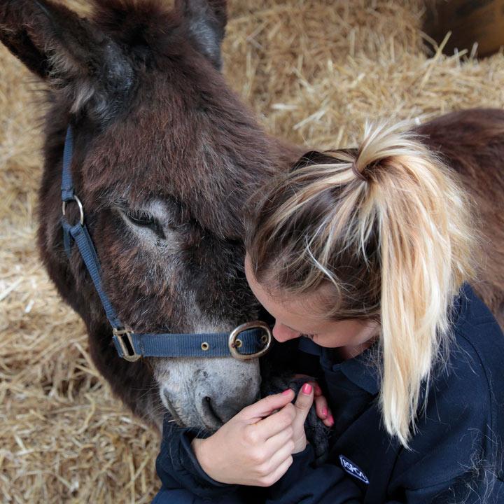 Feed a Donkey