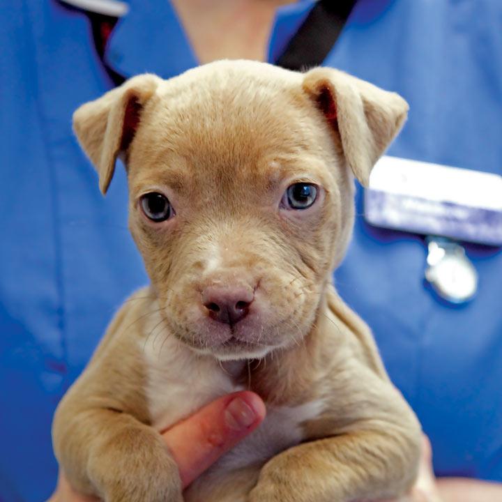 Nurse a Dog Back to Health