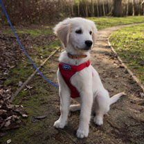 RSPCA Car and Walking Harness - Extra Large Red