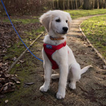 RSPCA Car and Walking Harness - Large Red