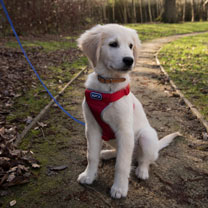 RSPCA Car and Walking Harness - Small Red