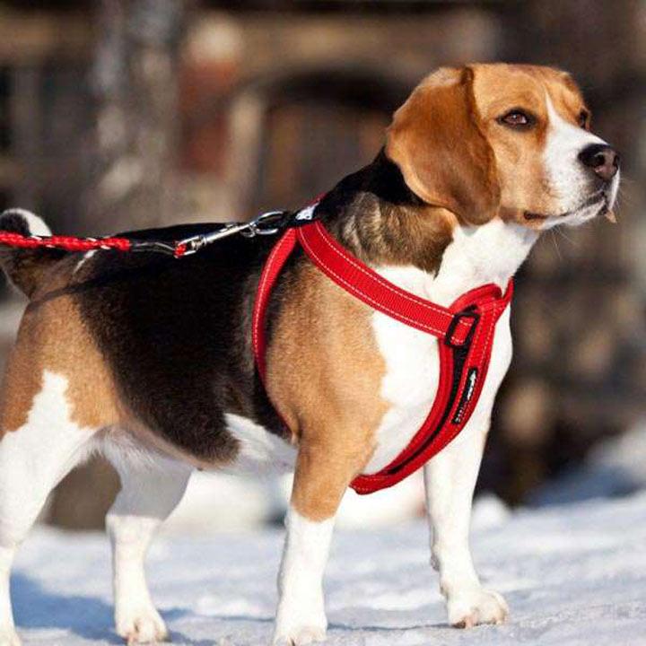EzyDog Chest Plate Dog Harness - Medium Red