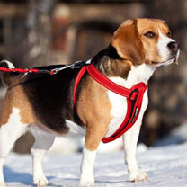 EzyDog Chest Plate Dog Harness - Extra Large Red
