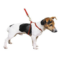 Ancol Padded Red Nylon Harness - Large