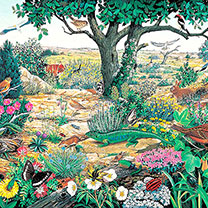 Jigsaws - Wildlife Collection