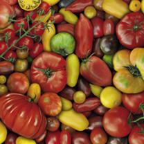 Tomato Jigsaw