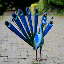 Decorative Metal Peacock