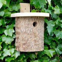 Nest Box - Robin Log & Log Tit