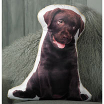 Cushion - Chocolate Labrador 47 x 39cm