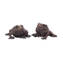 Garden Frogs