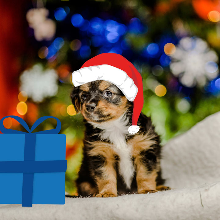 Warm Hearted Gift - Santa Paws