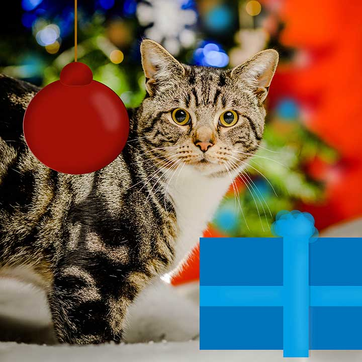 Warm Hearted Gift - Miaowy Christmas