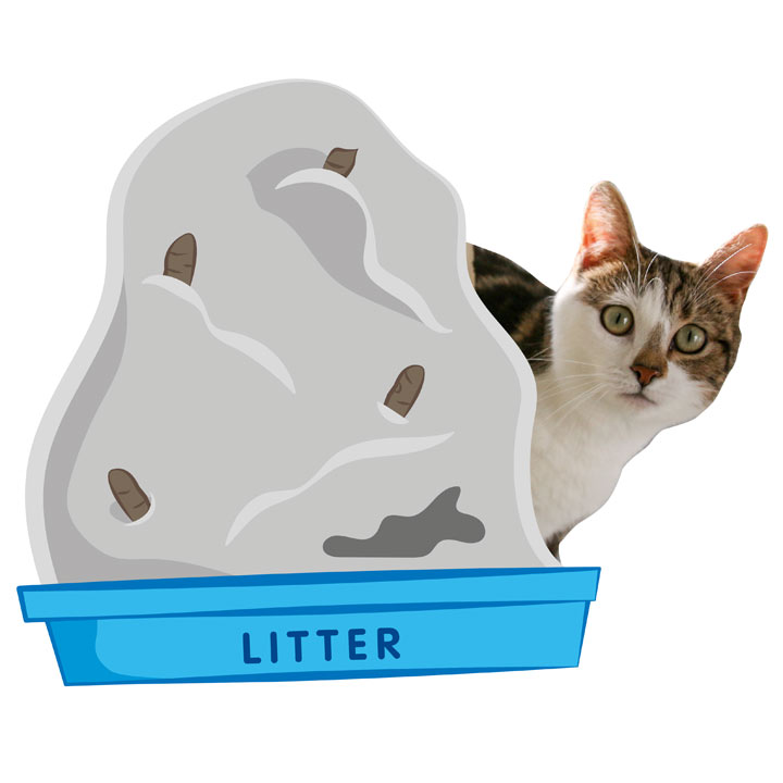 Warm Hearted Gift - Kitty Litter!