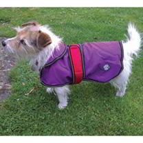 2 in 1 Dog Coat - Purple 50cm