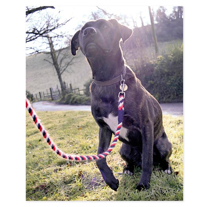 Wool Dog Lead