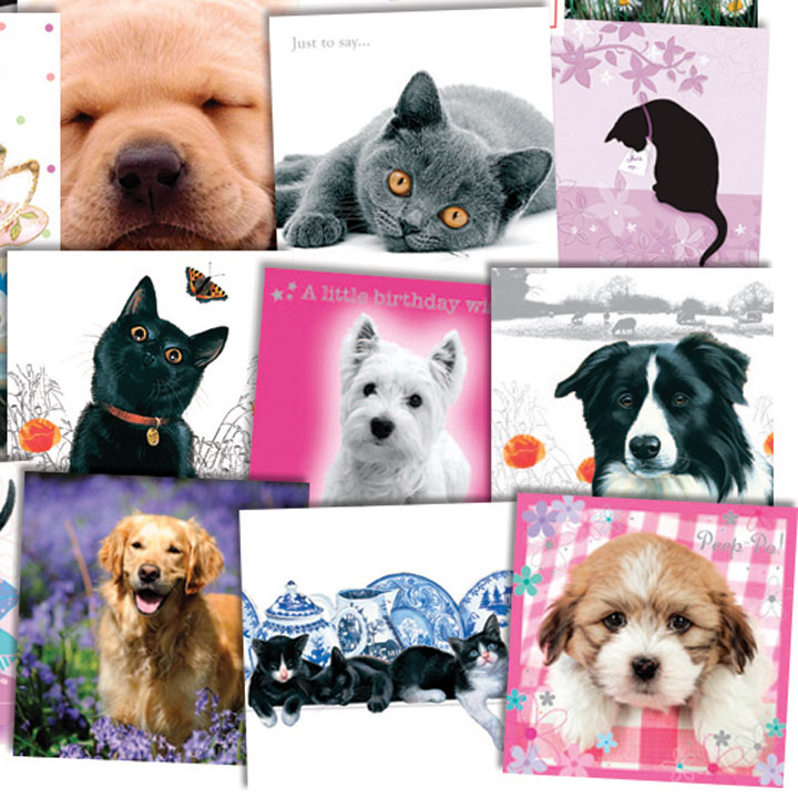 Super Value Cat and Dog Card Assortment