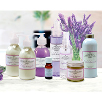 Lavender - Angustifolia Oil