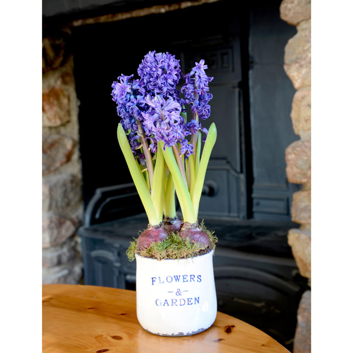 Hyacinth Delft Blue Planter