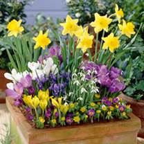 Bulb Container Collection - LUCKY DIP