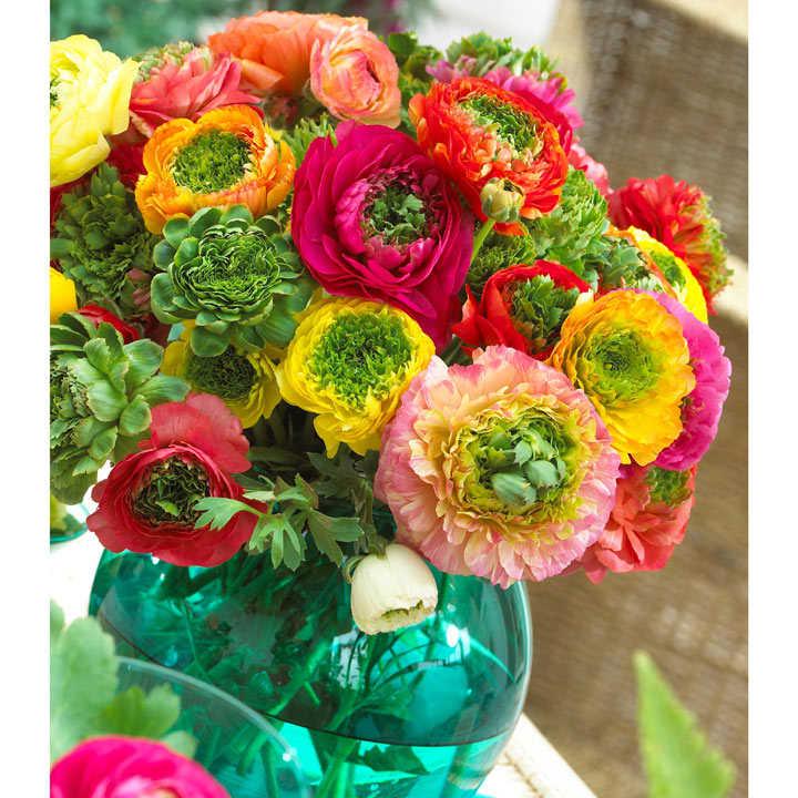 Ranunculus Bulbs - Mirabelle Vert Mix