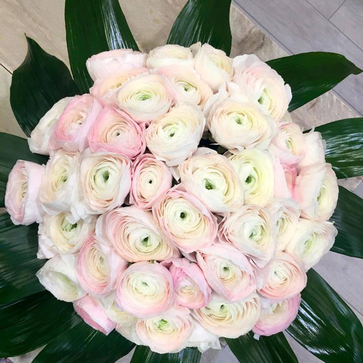 Ranunculus Bulbs - Patello