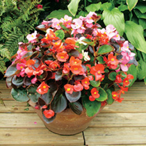 Patio Pot Flower Plant Collection