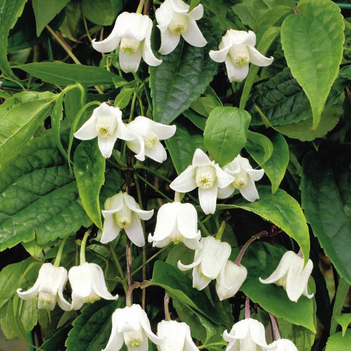 Beautiful Plant Plant Winter Beauty