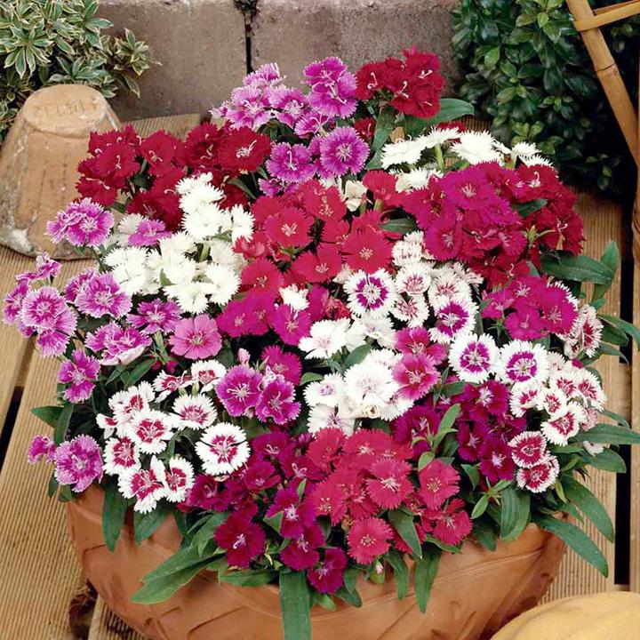 http://suttons.s3.amazonaws.com/p/FLSDIA25052_3.jpg