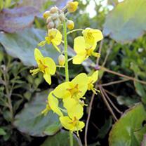 Perennial Shady Garden Collection