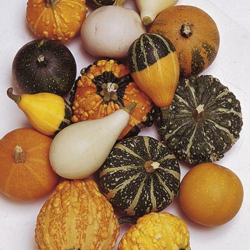 Gourd (Inedible) Seeds - Ornamental